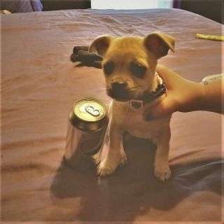 Adorable Puppy Needs new home