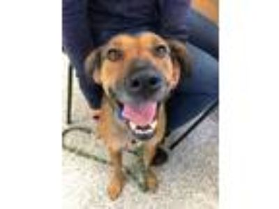 Adopt Shooter a Brown/Chocolate Mixed Breed (Medium) / Mixed dog in Hood River