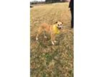 Adopt Coach a Terrier (Unknown Type, Small) / Mixed dog in Comanche