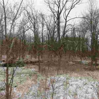 2920 Leatherwood Creek Sidney, 10 wooded acres for your new