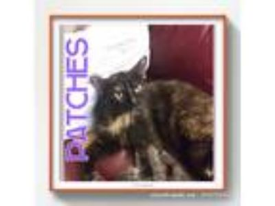 Adopt Patches a Calico or Dilute Calico Domestic Longhair (long coat) cat in Oak