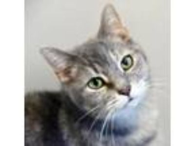 Adopt Sheena a Tortoiseshell Domestic Shorthair cat in Green Bay, WI (24766757)