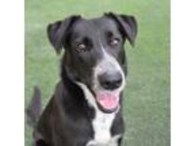 Dogs for Adoption Classifieds in San Mateo, California - Claz org