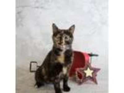 Adopt Pen 20 Claudia a Domestic Short Hair