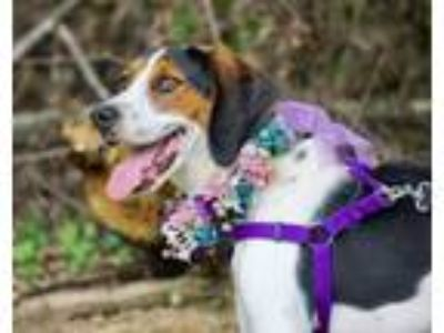 Adopt Willow a Hound