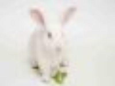 JONATHAN BUN NESS Bunny Rabbit Rabbit