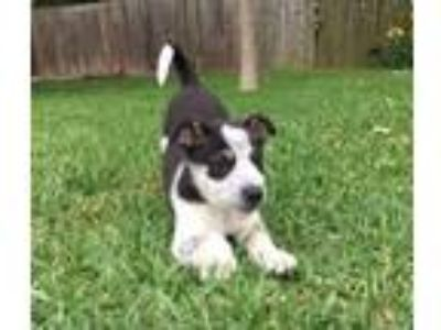 Adopt Willie a Mixed Breed