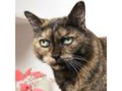 Adopt Arizona (mcas) a Domestic Shorthair / Mixed (short coat) cat in Troutdale