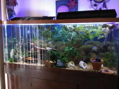 Guppy fish tank