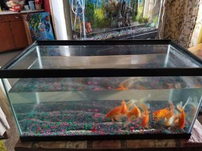40 gal tank from petco comes with glass top read full description asking 60.00