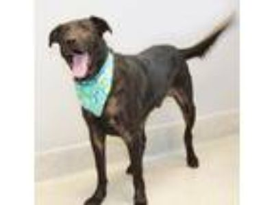 Adopt Darth Vader a Black Mixed Breed (Large) / Mixed dog in Lansing