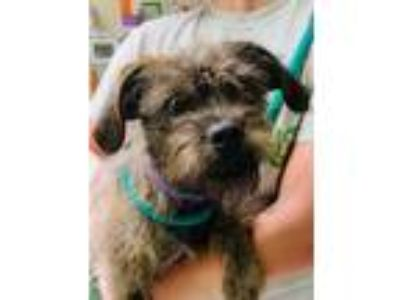 Adopt Nala a Black Terrier (Unknown Type, Small) / Mixed dog in Clearwater