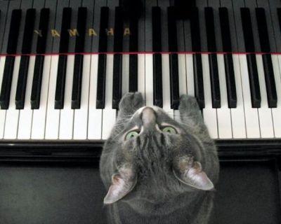 Anamosa, IA Piano Tuning and Repair - Piano Tuner for Anamosa, IA 52205