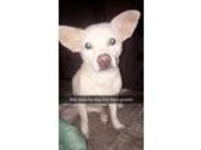 Adopt kJ a White Terrier (Unknown Type, Medium) / Mixed dog in Kathleen