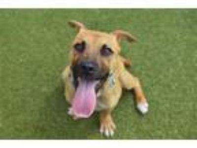 Adopt Vince a Shepherd (Unknown Type) / Hound (Unknown Type) / Mixed dog in