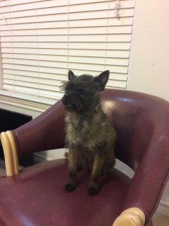 4 year old Mix Terrier Free
