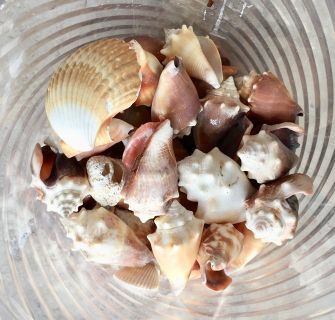 Various Sea Shells