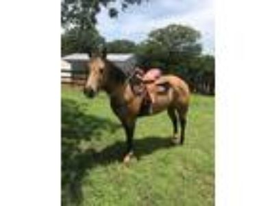 Flashy Fargo Buckskin barrel mare