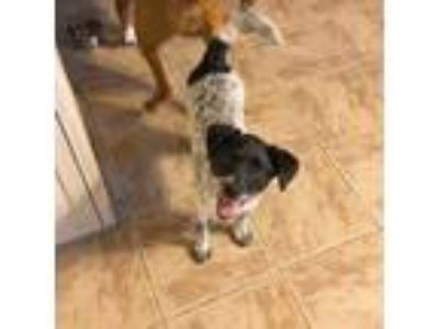 Adopt Ciao Bella a Terrier (Unknown Type, Medium) / Mixed dog in Boston