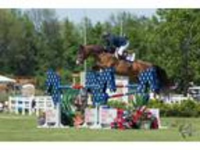 jumpereq horse for lease