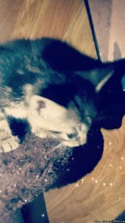 cats for sale!!!!!