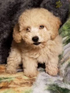 Puppy Stuff For Sale Classifieds In Grove City Ohio