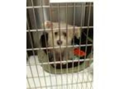 Adopt Sparkle a White Terrier (Unknown Type, Medium) / Bichon Frise / Mixed dog