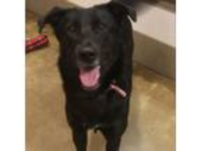 Adopt Starla a Black Collie dog in Green Bay, WI (25943396)