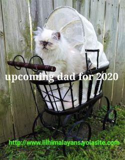 Himalayan kittens cfa Omaha Nebraska waiting list for 2020