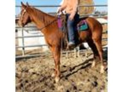 Craigslist - Horses for sale Classified Ads in Fresno, Ohio