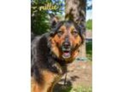Adopt Millie a Black Shepherd (Unknown Type) / Mixed dog in Yakima