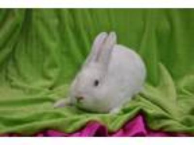 Adopt TICK TOCK a White Other/Unknown / Mixed rabbit in Fruit Heights