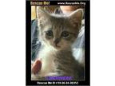 Craigslist - Cats for Adoption Classifieds in Ft Belvoir
