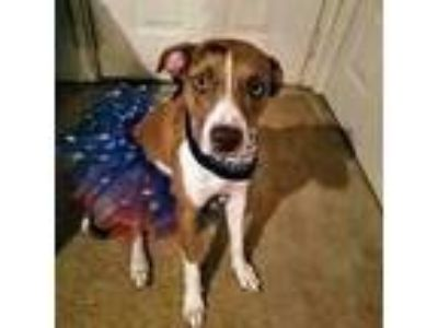 Adopt Riley a Brown/Chocolate - with White Catahoula Leopard Dog / Mixed dog in