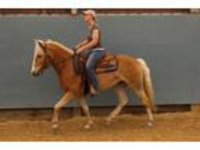 Powerful leggy mare well known family Dressage DNA tested carcinoma