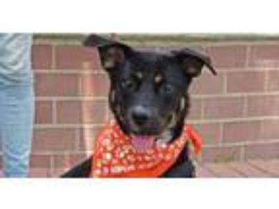 Adopt Shelly a Mixed Breed
