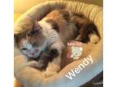 Adopt Wendy a Calico or Dilute Calico Maine Coon (medium coat) cat in
