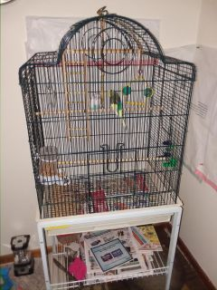 Two parakeets and cage