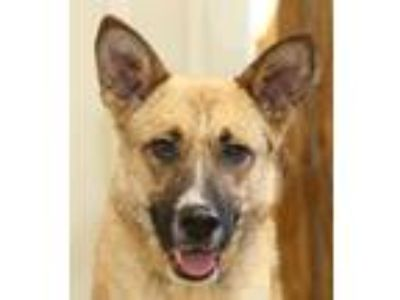 Adopt YoYo a German Shepherd Dog / Mixed dog in Rossville, TN (21653508)