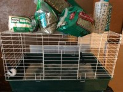 guinea pig cage pallets hay and water dispensers