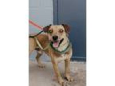Adopt Tommy a Terrier