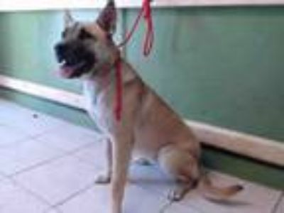 Adopt BELLA a German Shepherd Dog, Mixed Breed