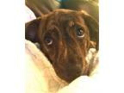 Adopt Nutmeg a Mixed Breed