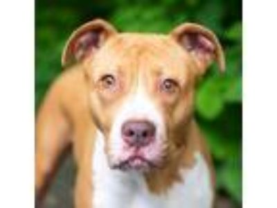 Adopt Sherbert a Tan/Yellow/Fawn Mixed Breed (Large) / Mixed dog in Adrian