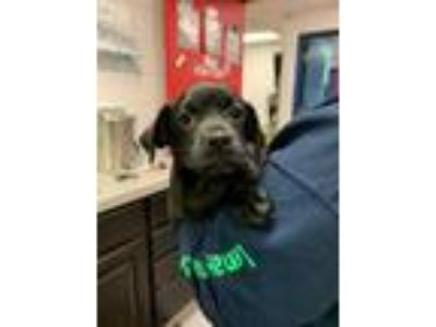 Adopt Jack a Black Mixed Breed (Small) / Mixed dog in Adrian, MI (25256579)