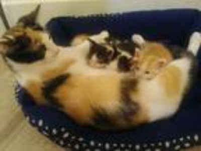 4 sweet kittens free to good homes