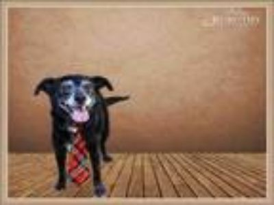 Adopt PASCUAL a Terrier, Mixed Breed