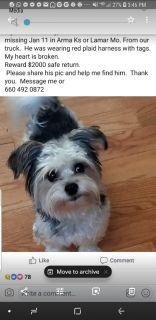 Missing little dog