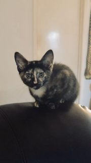 11 week old female looking for new home.