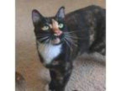 Adopt Ember a Orange or Red Domestic Shorthair cat in Meridian, ID (25596892)